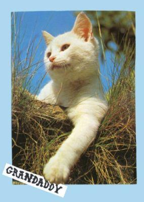 un petit chat que jason veut epouser si c'est legal